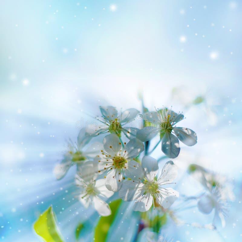 De bloesem van de lente stock fotografie