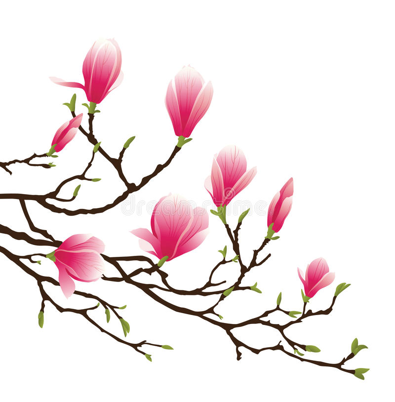 De bloesem van de magnolia stock illustratie