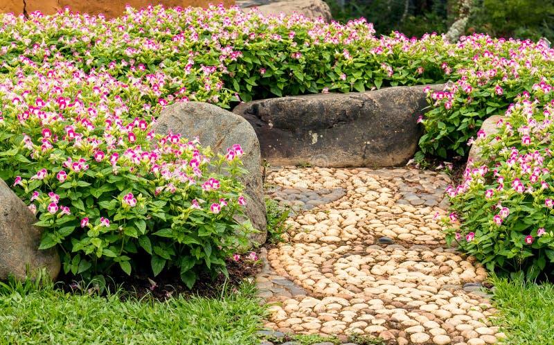 De bloesem van de Toreniabloem in bloemtuin royalty-vrije stock afbeeldingen