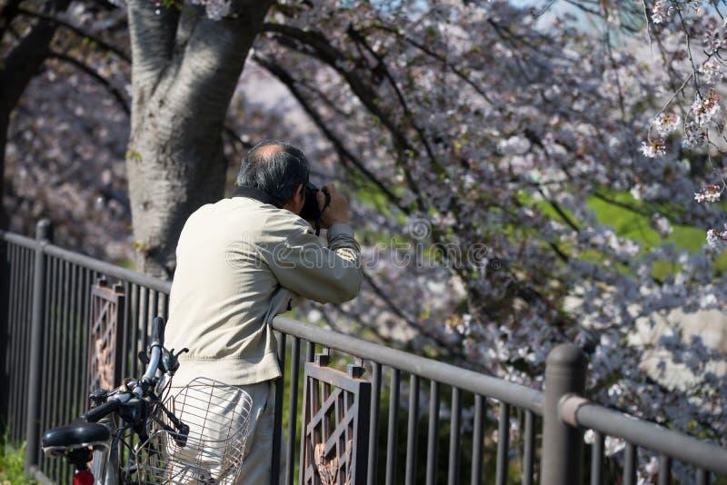 de bloesem van de fotokers bij Gojo-rivier, Nagoya royalty-vrije stock foto