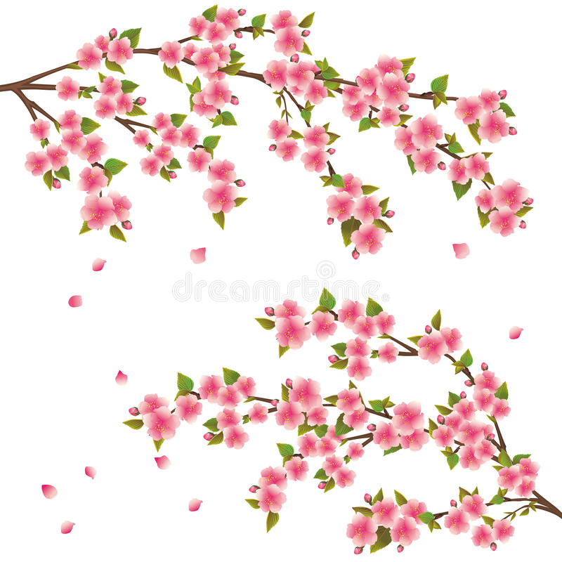 De bloesem van Sakura - Japanse kersenboom vector illustratie