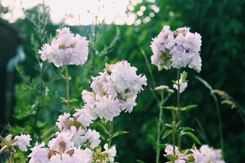 De bloesemachtergrond van de de lentebloem royalty-vrije stock afbeeldingen