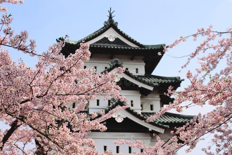 De bloesems van de kers en Japans kasteel stock foto's