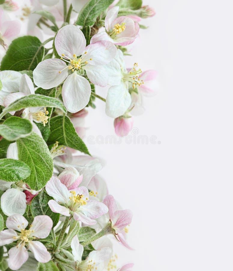 De bloesems van de lente op roze witte achtergrond stock foto