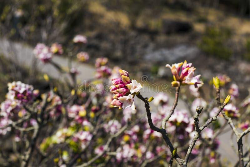De blommande blommorna med oskarpa stammar i bakgrunden arkivfoton