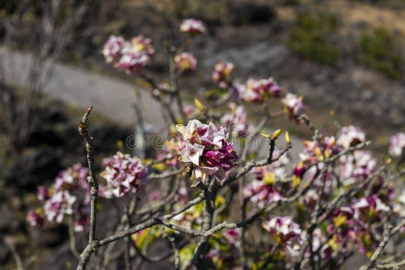 De blommande blommorna med oskarpa stammar i bakgrunden royaltyfria bilder