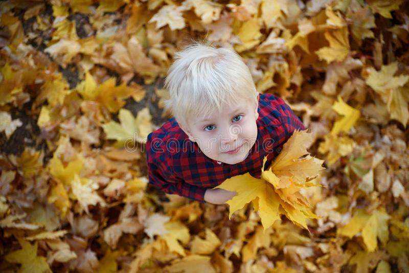 De blonde jongen met een boeket van de herfstbladeren staat op en kijkt Hoogste mening Het concept van de herfst Ge?soleerd stock afbeelding