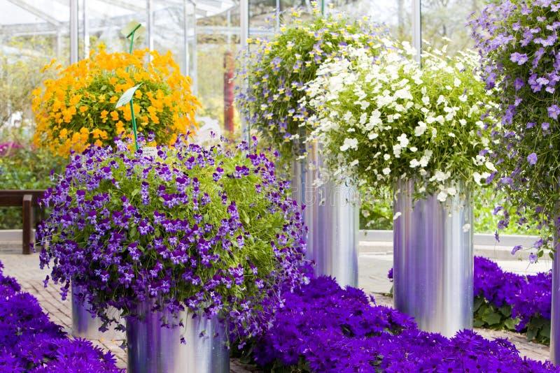 De boeketten van de bloem stock foto's