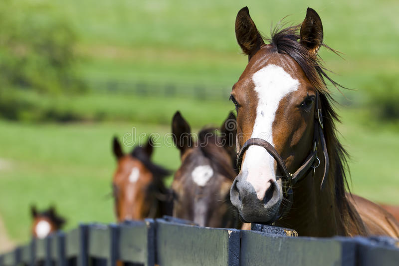 De Boerderij van het paard royalty-vrije stock afbeeldingen
