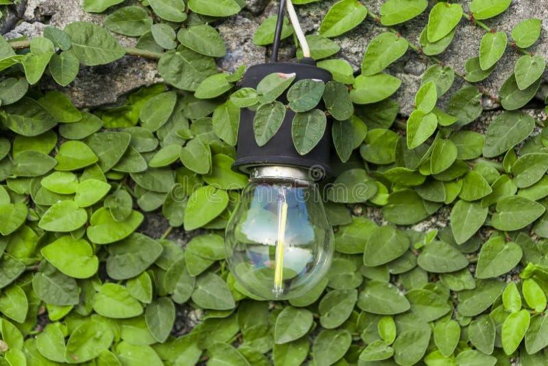 De bol wordt opgezet op een cementmuur en heeft een groen blad als stock foto's