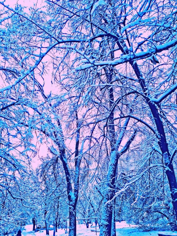 de bomen befringed met sneeuw royalty-vrije stock afbeeldingen