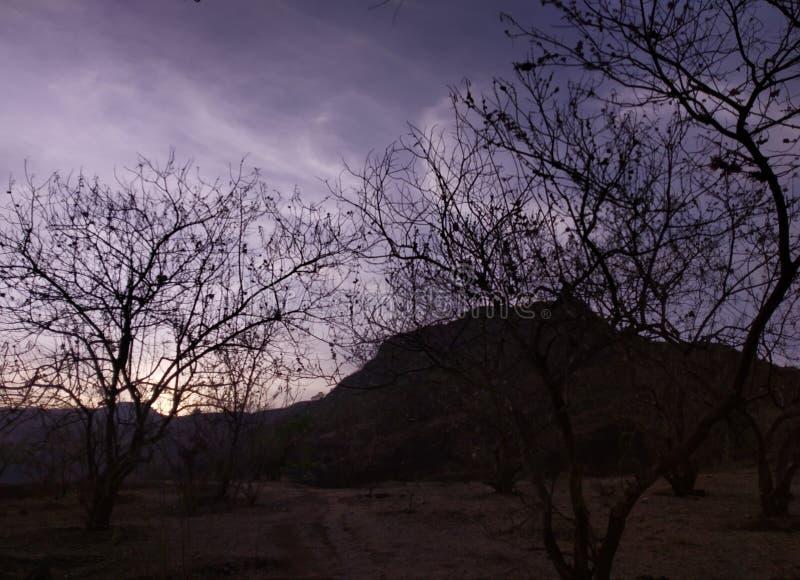De bomen bij avond is blik als dit stock foto