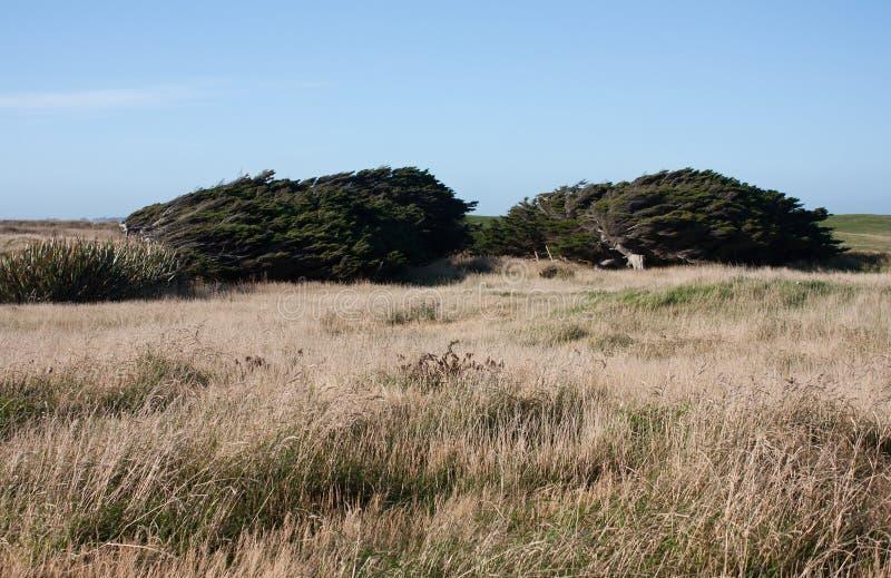 De bomen bogen van de sterke winden in Catlins in het Zuideneiland in Nieuw Zeeland stock fotografie