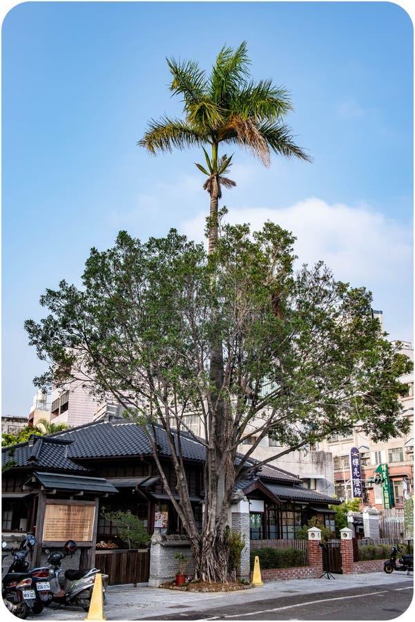 De bomen in de boom vormen een inclusieve boom stock foto's