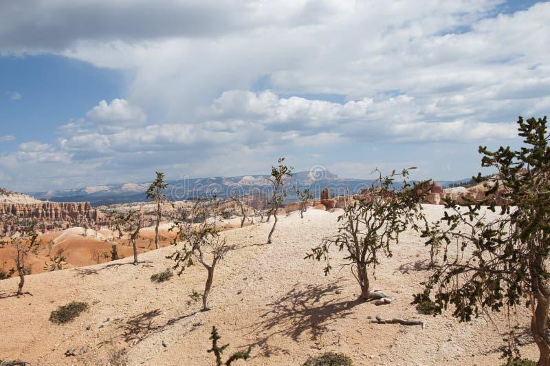 De Bomen in Bryce Canyon Hoodoos Desert Landscape stock afbeeldingen