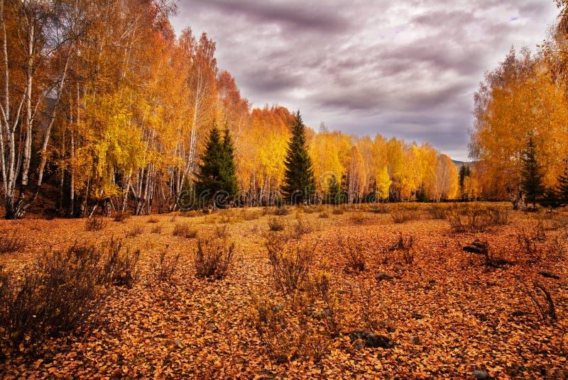 De bomen in de herfst stock afbeeldingen