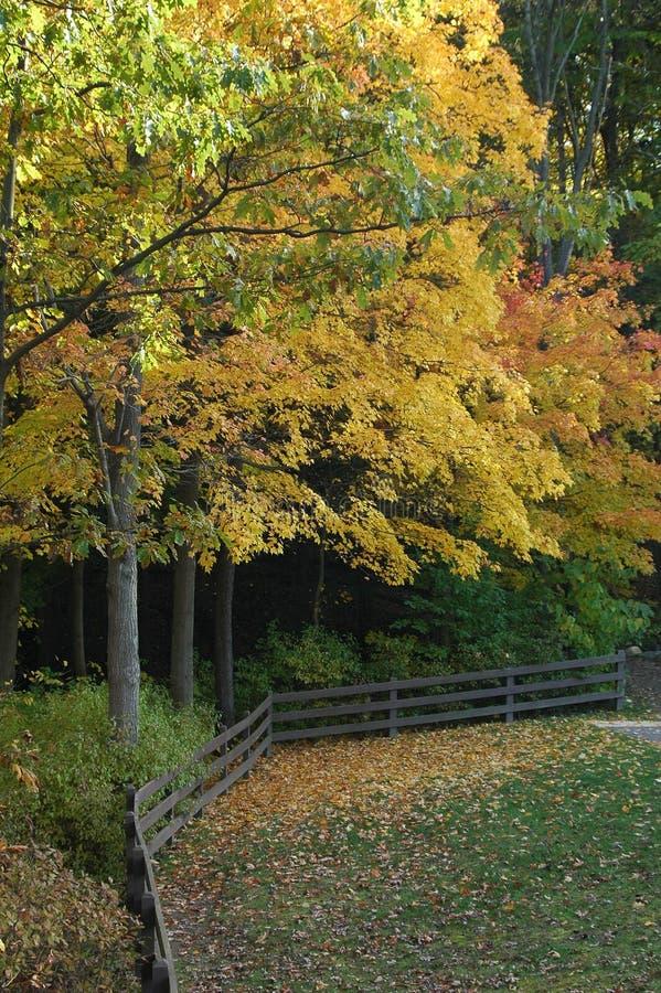 De bomen die van de daling kleur veranderen stock afbeeldingen