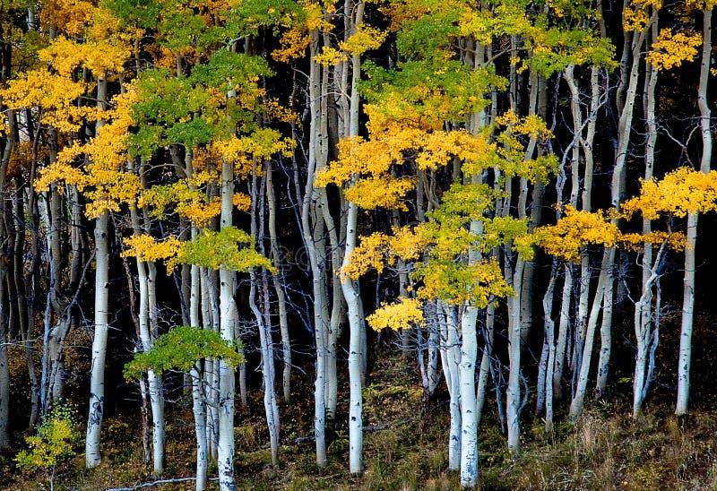 De bomen door het Bos royalty-vrije stock foto