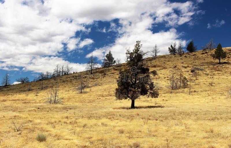 de bomen drogen land royalty-vrije stock afbeelding