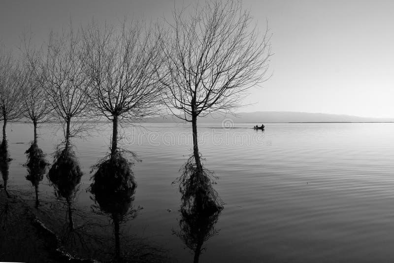 De bomen en de boot van het meer stock afbeelding