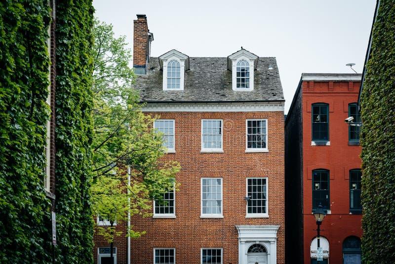 De bomen en de historische huizen Fells binnen Punt, Baltimore, Maryland royalty-vrije stock foto's