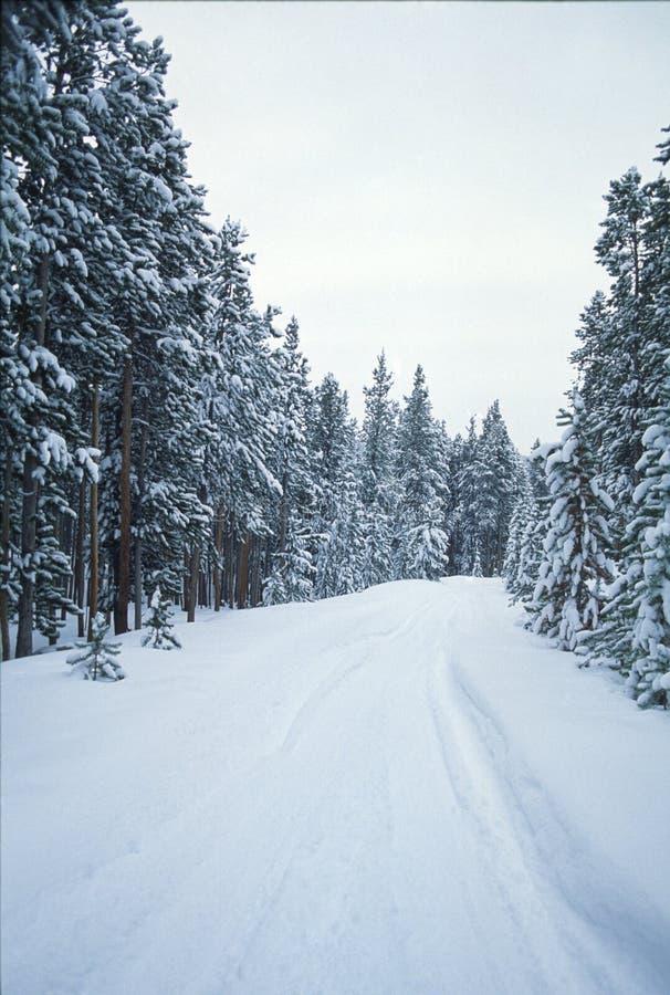 De bomen en de weg van de winter royalty-vrije stock afbeelding