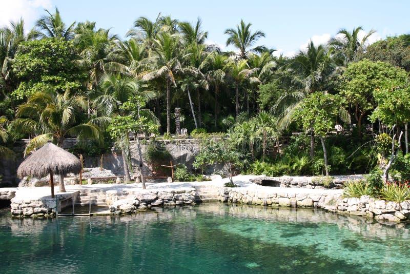De bomen en de installaties van Nice rond waterpool royalty-vrije stock foto's