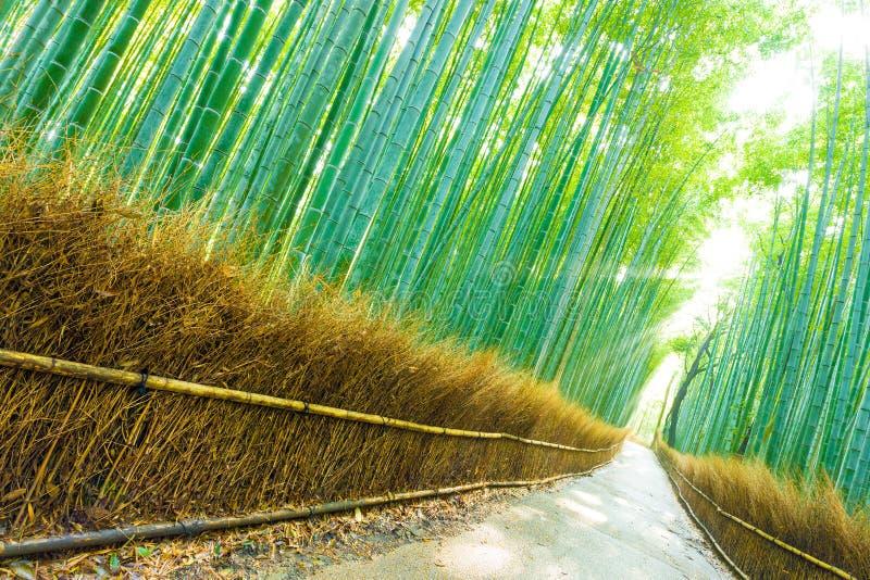 De Bomen Forest Road God Ray Tilted van het Arashiyamabamboe royalty-vrije stock afbeelding
