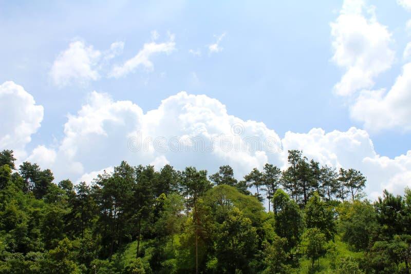 De bomen groeien op bergen en hemel stock foto