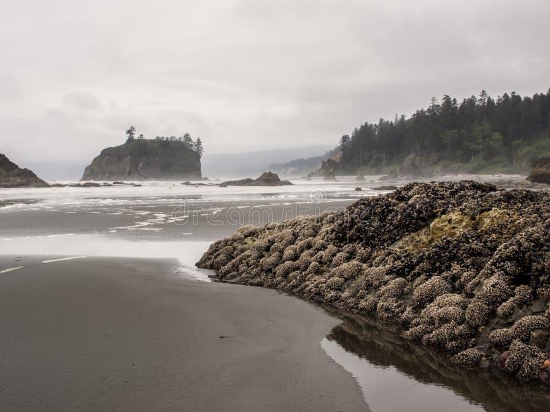 De bomen groeien op overzeese stapels bij zandig strand stock foto's