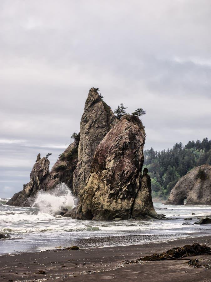 De bomen groeien op overzeese stapels bij zandig strand stock afbeeldingen