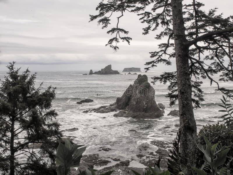 De bomen groeien op overzeese stapels bij zandig strand royalty-vrije stock afbeeldingen
