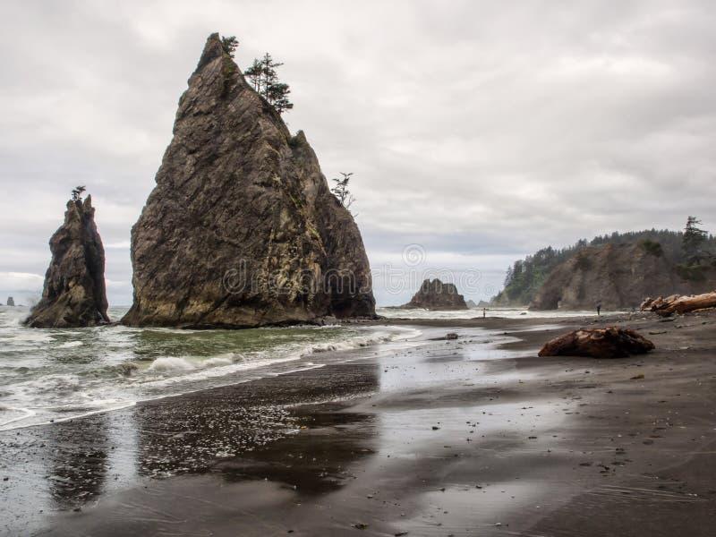 De bomen groeien op overzeese stapels bij zandig strand stock afbeelding