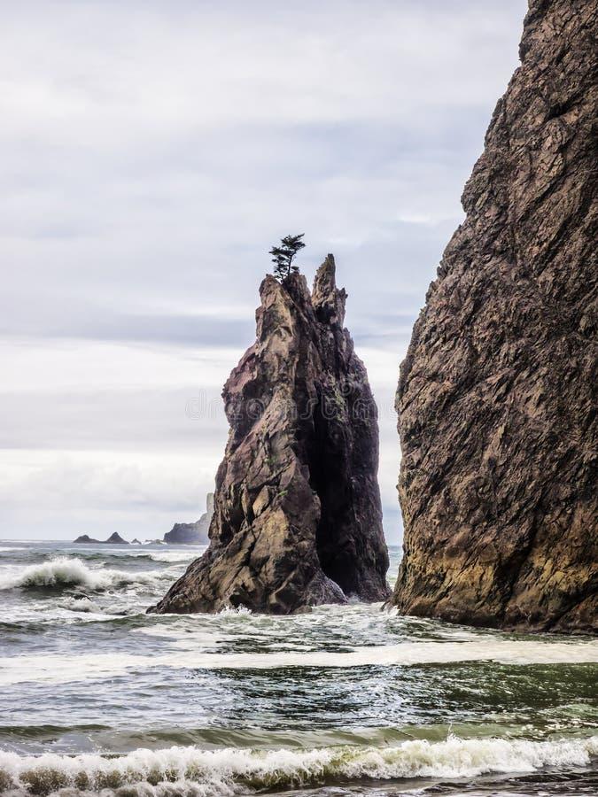 De bomen groeien op overzeese stapels bij zandig strand royalty-vrije stock foto