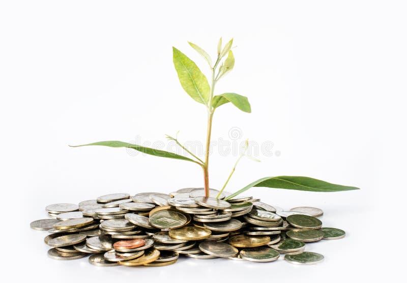 De bomen groeien van USD-concept de bedrijfsgroei als groei van bomen stock afbeelding