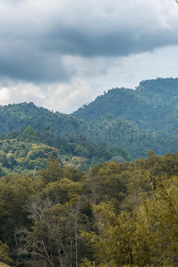 De bomen in het bos royalty-vrije stock fotografie