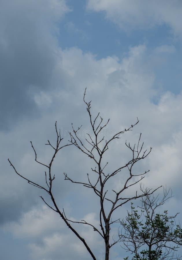 De bomen in het bos royalty-vrije stock afbeelding