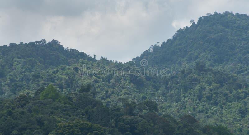 De bomen in het bos stock foto's