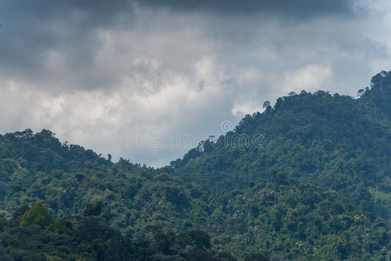 De bomen in het bos royalty-vrije stock afbeeldingen
