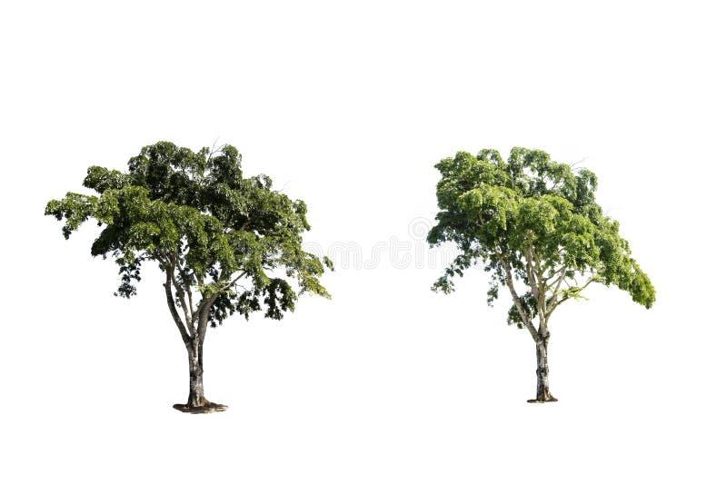 de bomen isoleren royalty-vrije stock afbeeldingen