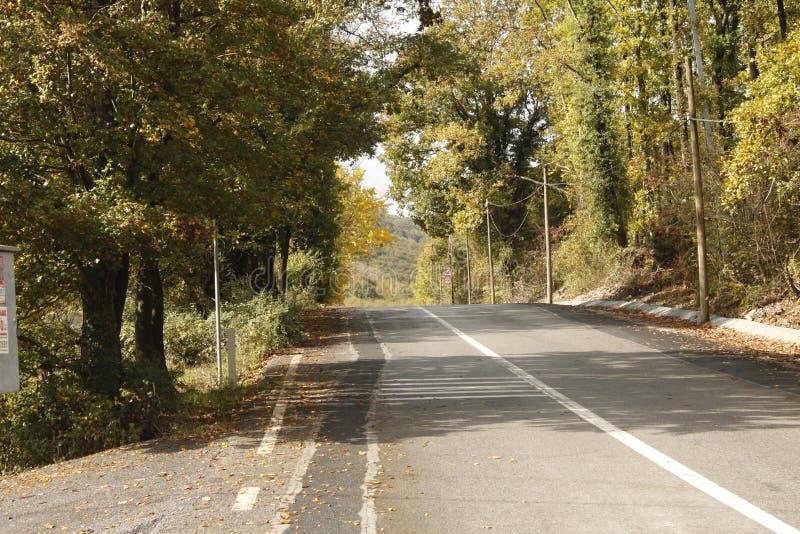 De bomen rond de weg stock afbeeldingen