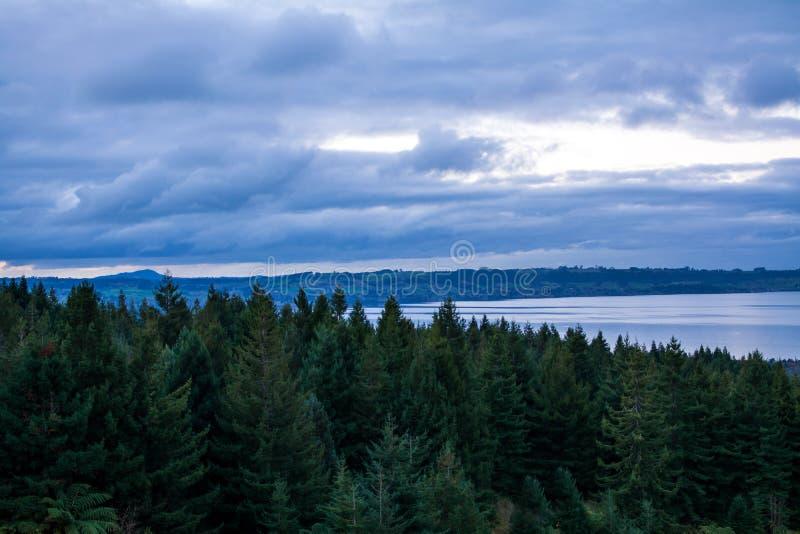 De bomen van de berghellingspijnboom over meer Rotorua in de schemer stock foto