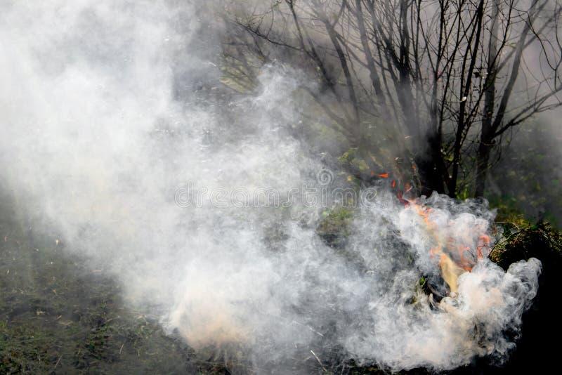 De bomen van de berokingstuin met rook, bescherming van insecten royalty-vrije stock foto