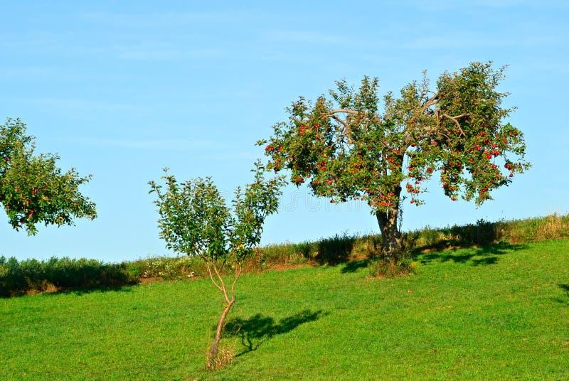 De Bomen van de appel stock afbeelding