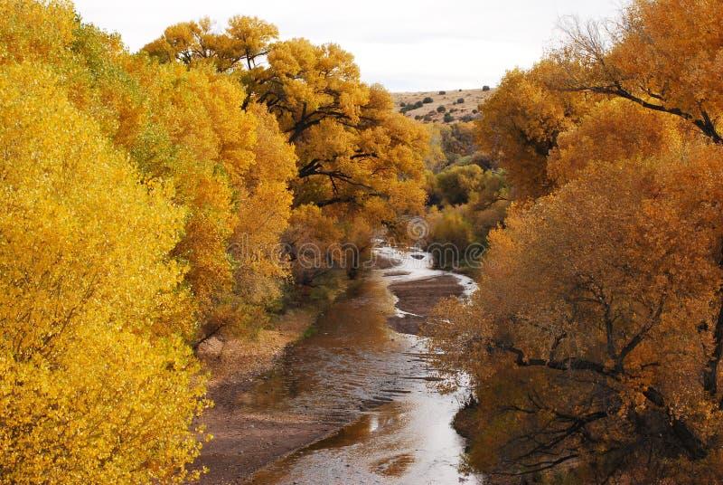 De bomen van de daling langs rivier royalty-vrije stock afbeeldingen