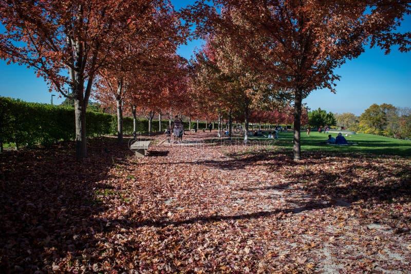 De bomen van de dalingskleur stock afbeeldingen