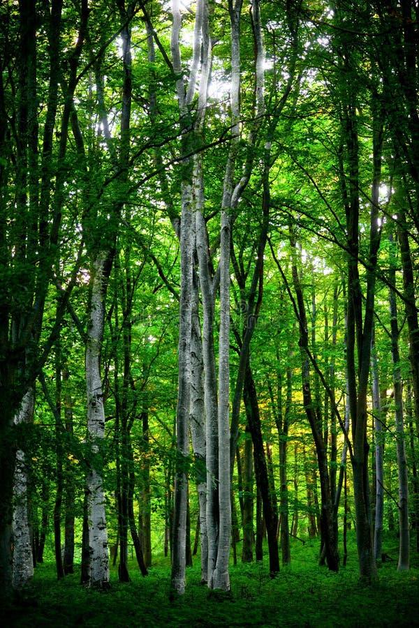De bomen van de esp stock afbeeldingen