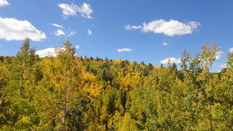 De bomen van de esp in de herfst royalty-vrije stock afbeeldingen