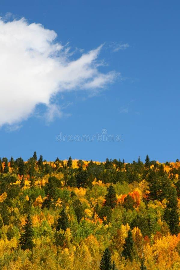 De bomen van de esp in de herfst royalty-vrije stock foto