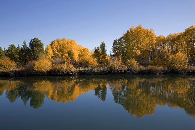 De bomen van de esp langs een rivier stock fotografie